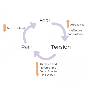 The Pain-Tension-Fear Cycle